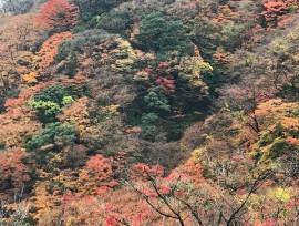 紅葉の変化を楽しみながら♬