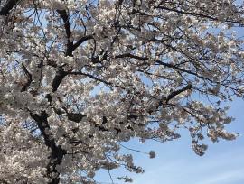 お花が綺麗になりました(o^―^o)